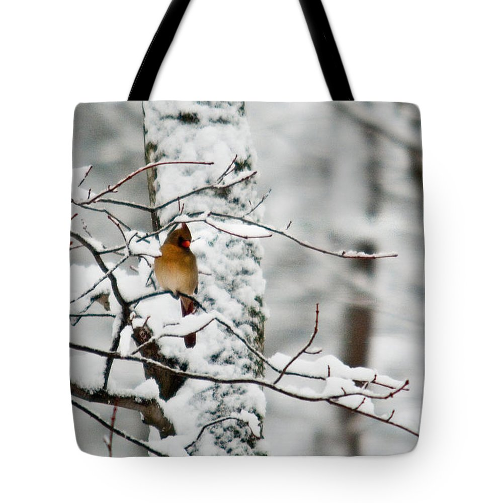 Cardinal Tote Bag featuring the photograph Classic Cardinal In Snow by Douglas Barnett