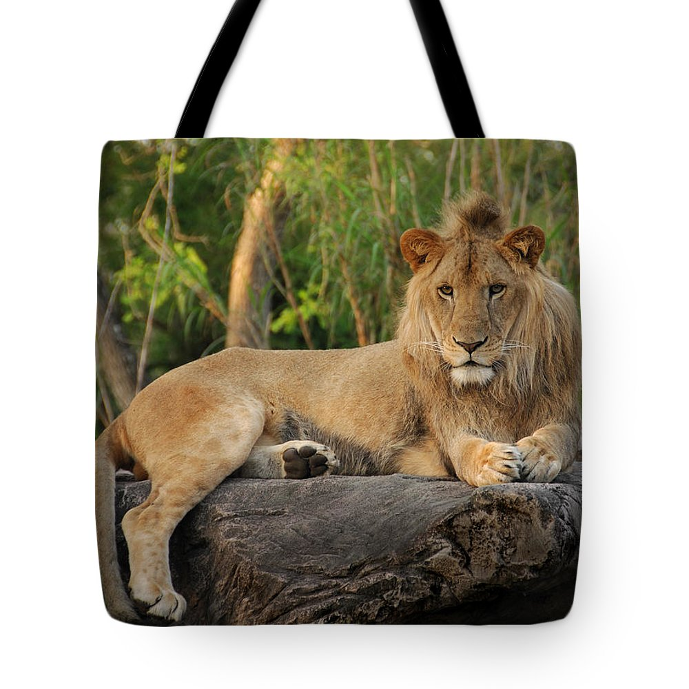 Lion Tote Bag featuring the photograph Classic Young Male by Steven Sparks