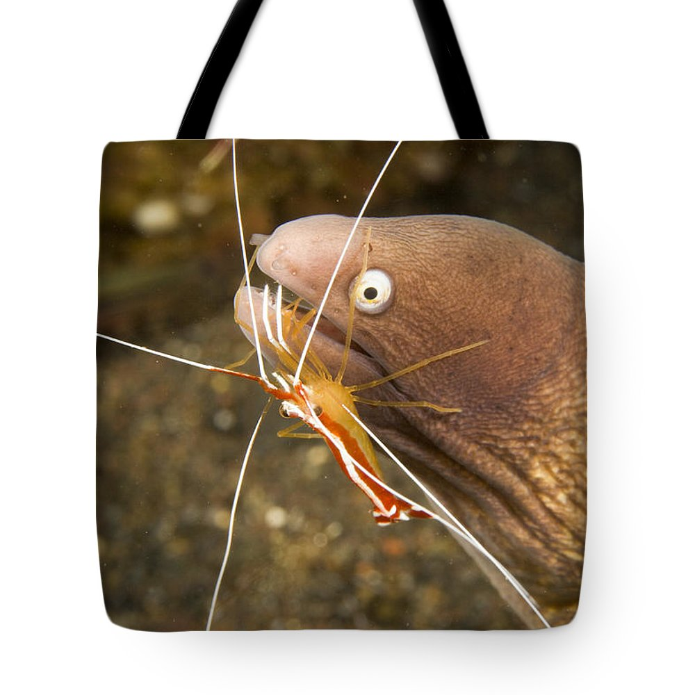 Cleaner Shrimp Tote Bag featuring the photograph Cleaner Shirmp Cleans Parasites by Tim Laman
