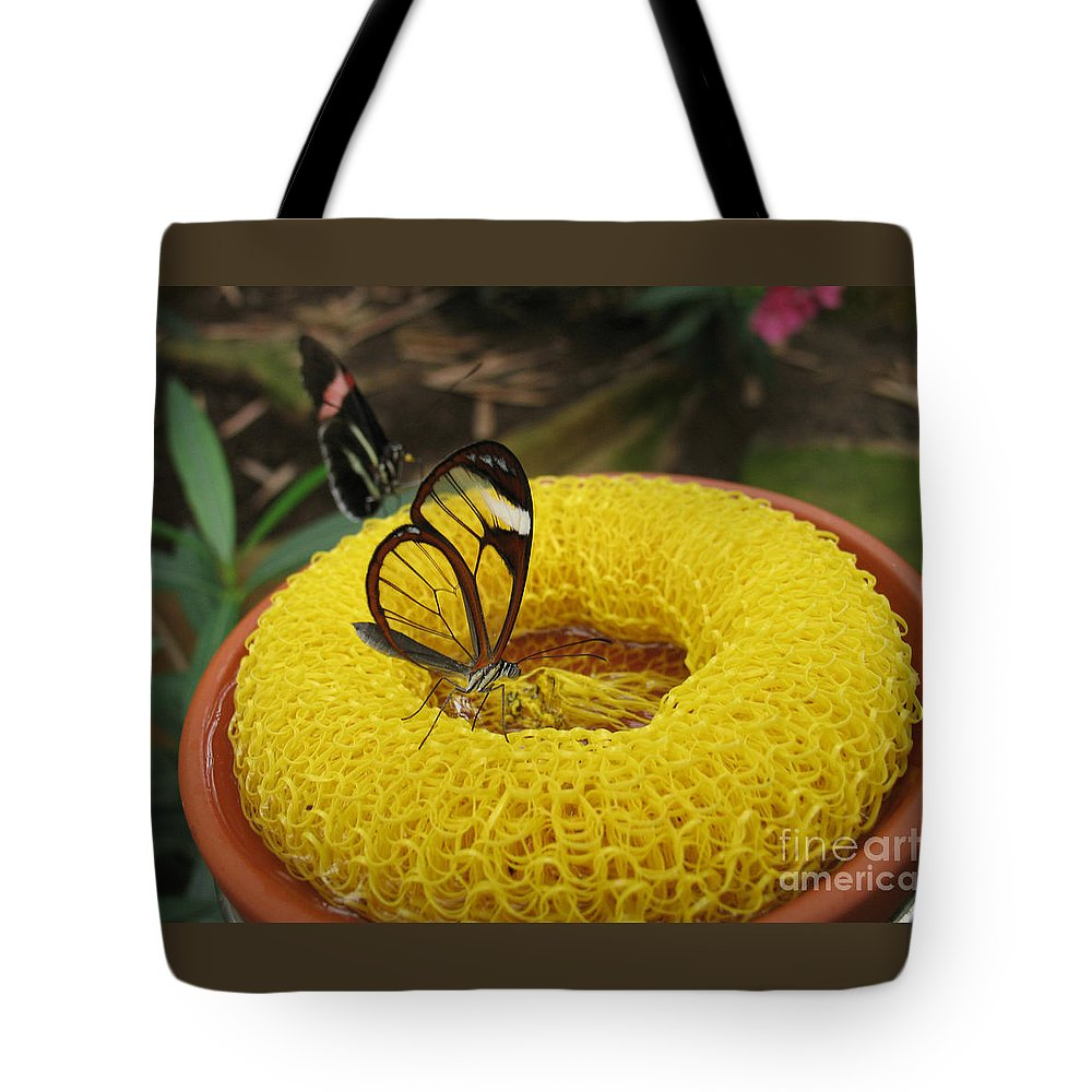 Butterfly Tote Bag featuring the photograph Clearwing Butterfly by Ann Horn