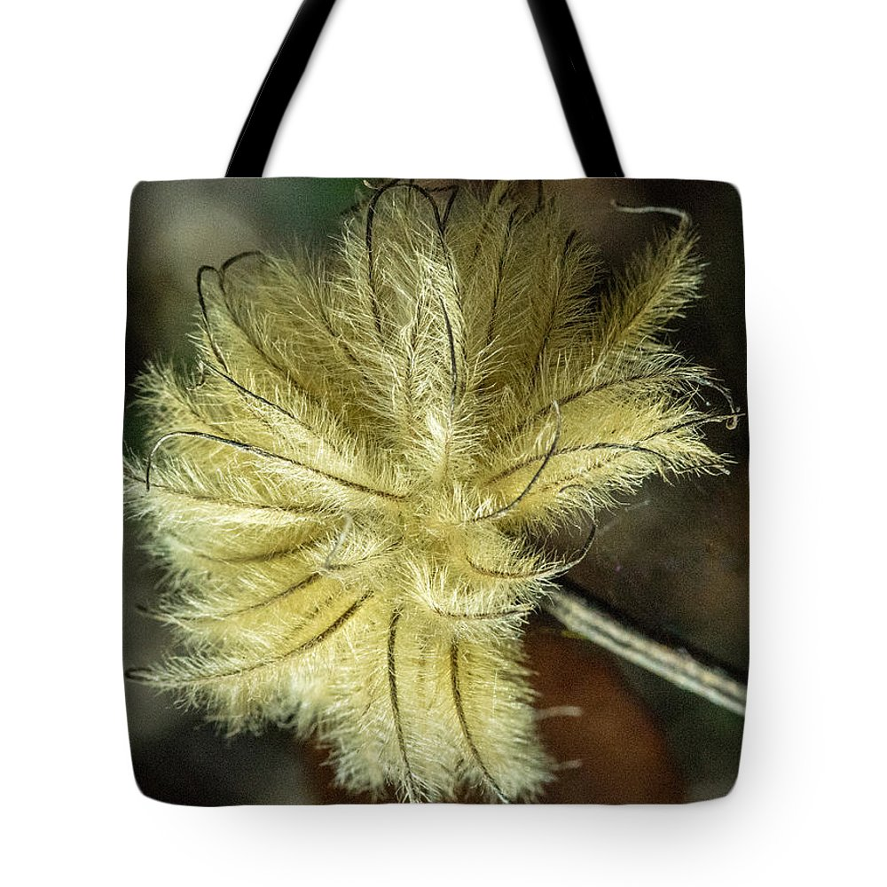 Clematis Tote Bag featuring the photograph Clematis Seed Head 1 by Douglas Barnett