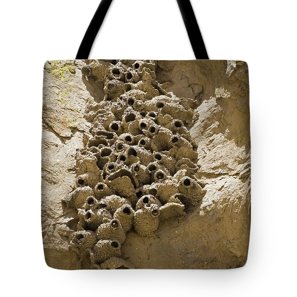 Monochromatic Tote Bag featuring the photograph Cliff Swallow Hirundo Pyrrhonota Nests by Rich Reid