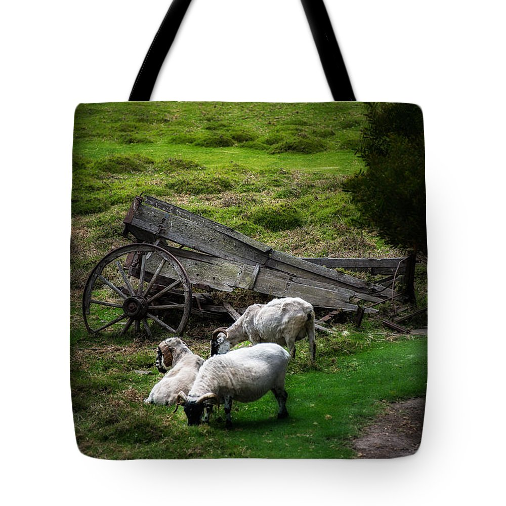 California Tote Bag featuring the photograph Clint's Sheep by Patrick Boening