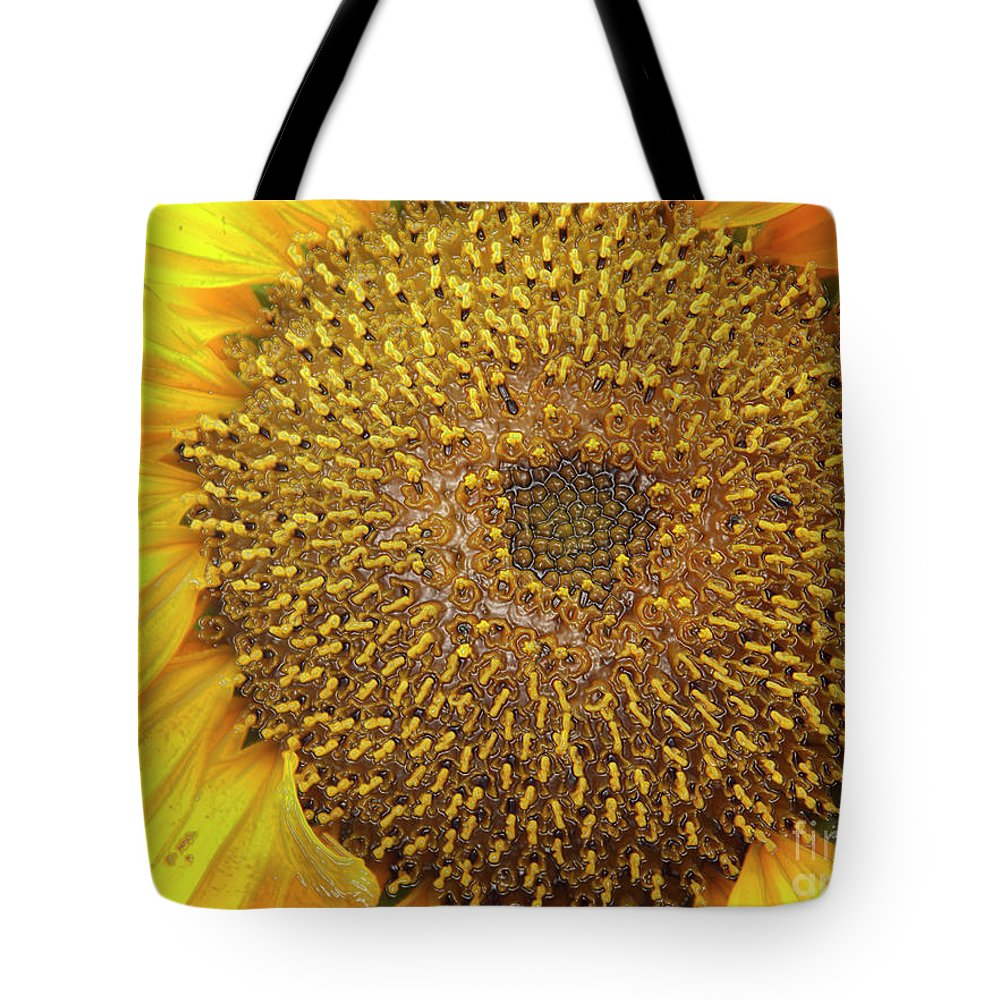 Helianthus Tote Bag featuring the photograph Close Up Of A Sunflower Head by Kevin Richardson