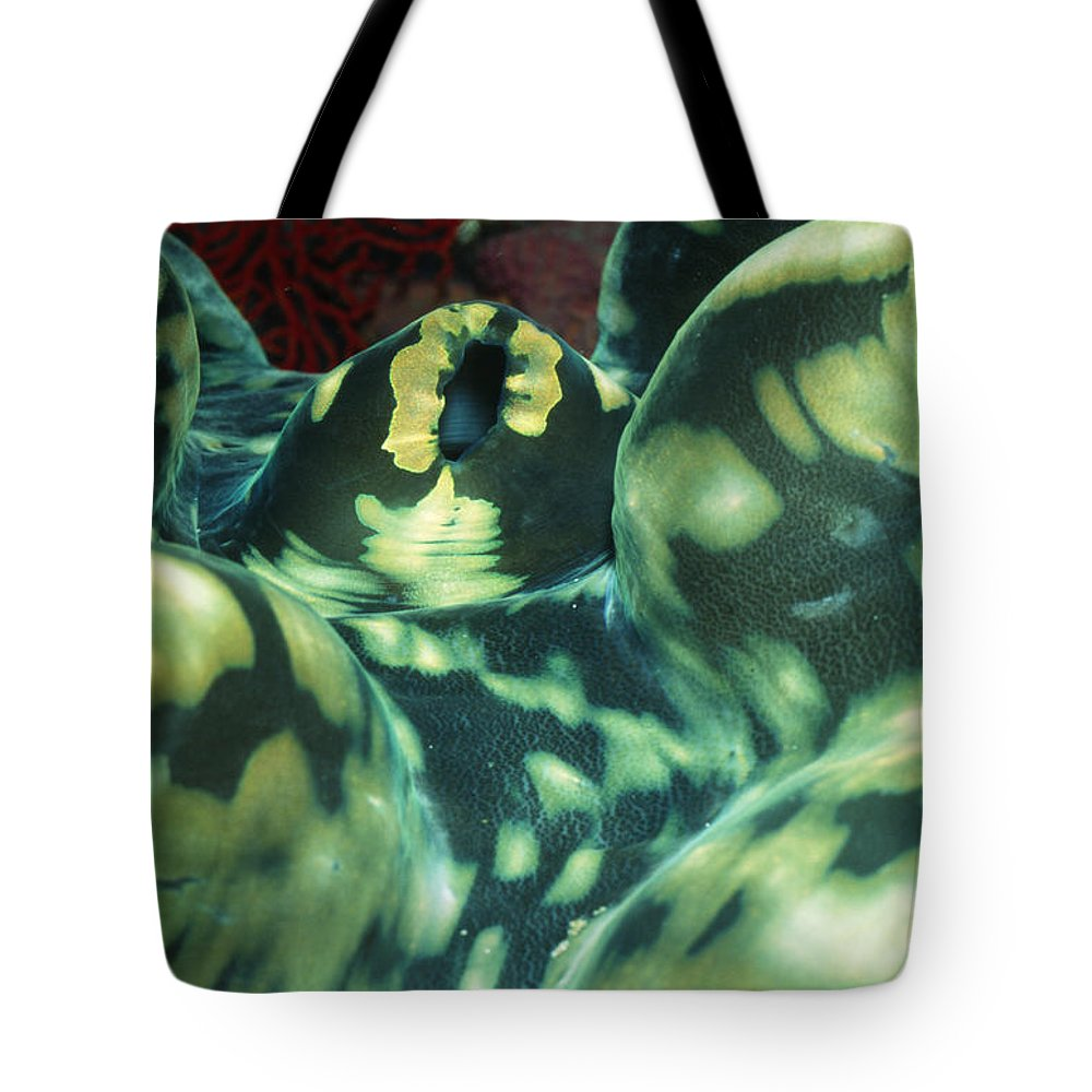 Solomon Islands Tote Bag featuring the photograph Close-up Of Giant Clam, Tridacna Gigas by James Forte