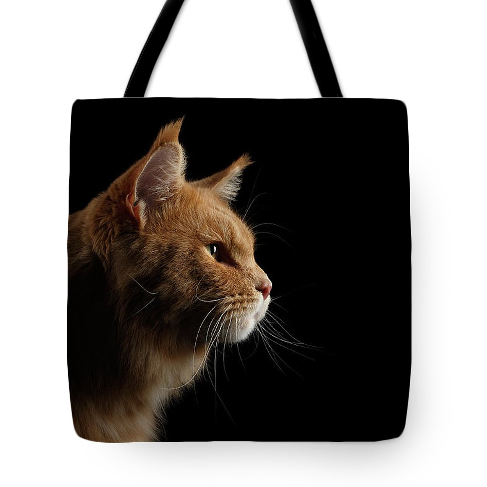 Cat Tote Bag featuring the photograph Close-up Portrait Ginger Maine Coon Cat Isolated On Black Background by Sergey Taran