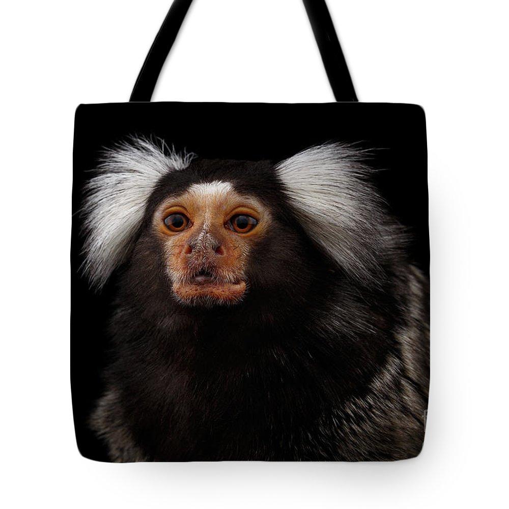 Marmoset Tote Bags | Fine Art America