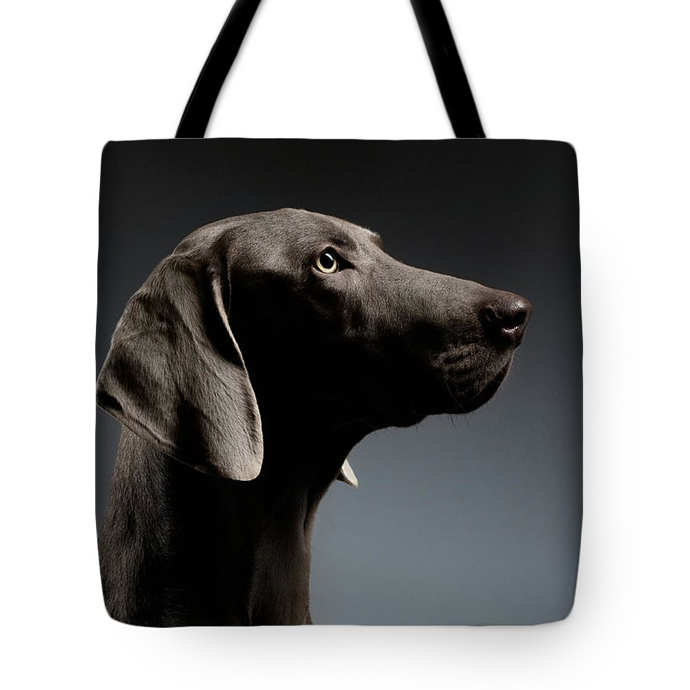 Dog Tote Bag featuring the photograph Close-up Portrait Weimaraner dog in Profile view on white gradient by Sergey Taran