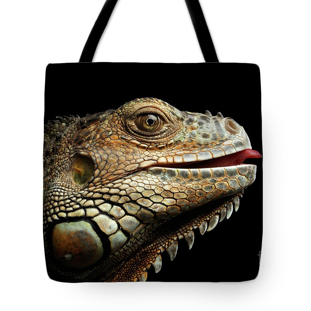 Iguana Tote Bag featuring the photograph Close-upgreen Iguana Isolated On Black Background by Sergey Taran