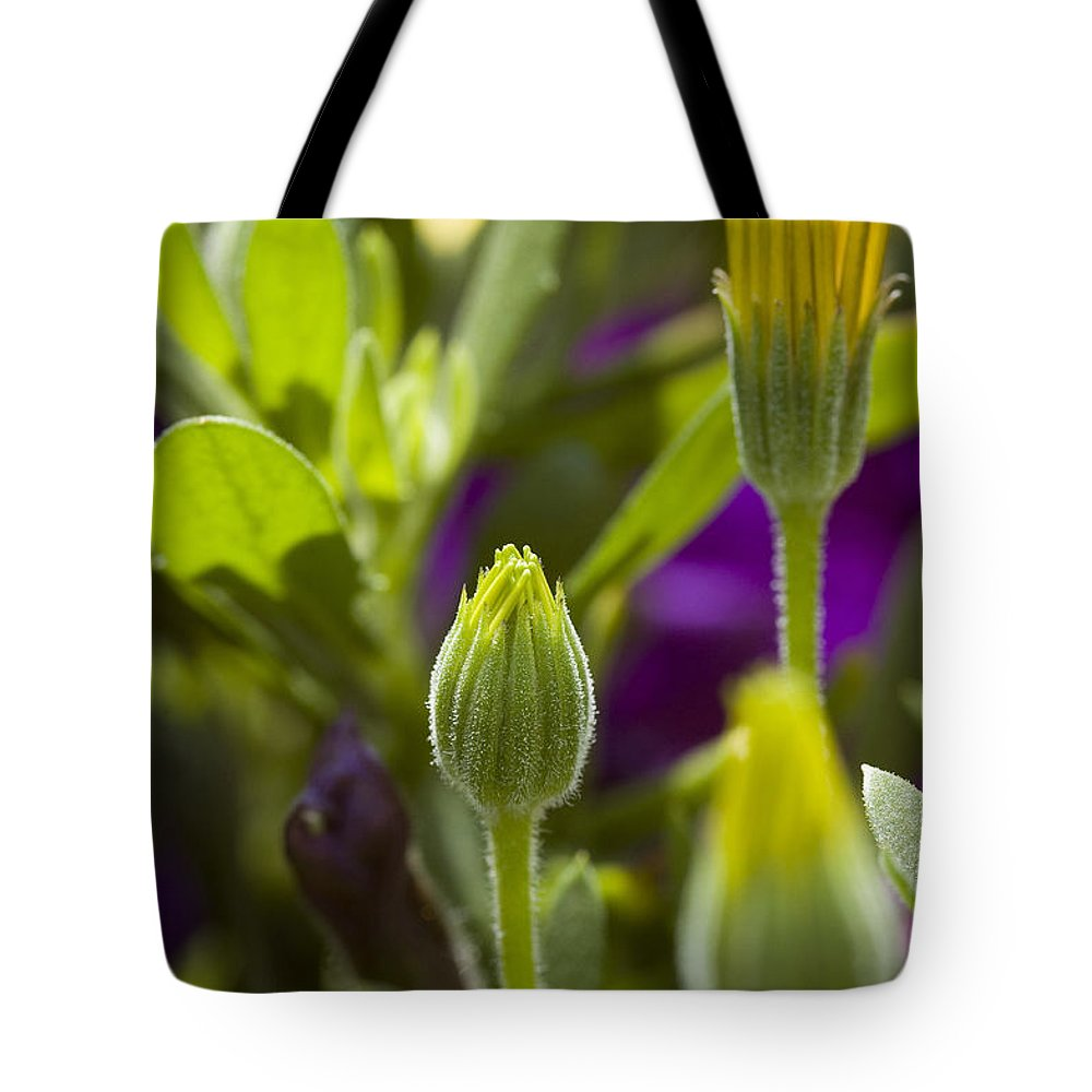 Osteospermum Hybrid Tote Bag featuring the photograph Close View Of Two Yellow Symphony by Todd Gipstein