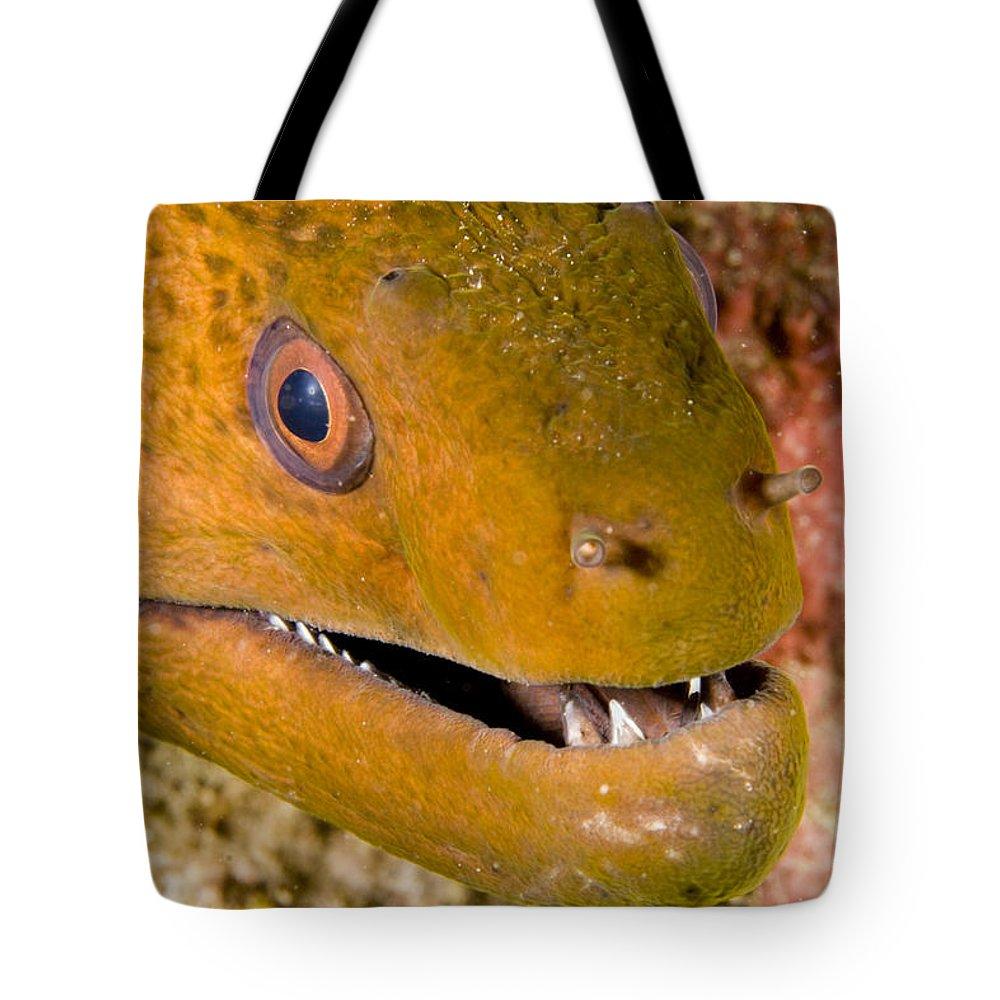 Closeups Tote Bag featuring the photograph Closeup Of A Giant Moray Eel by Tim Laman