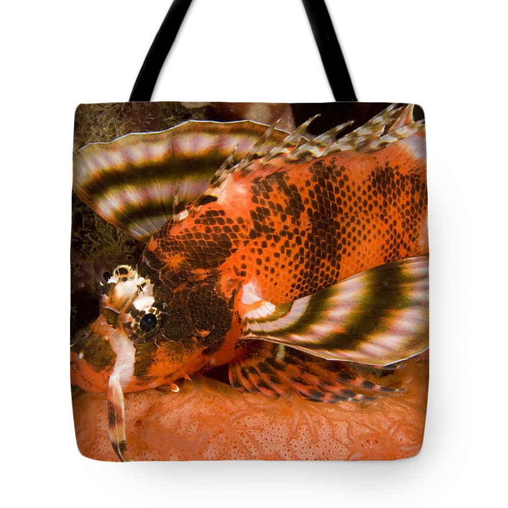 One Animal Tote Bag featuring the photograph Closeup Of An Ocellated Lionfish by Tim Laman