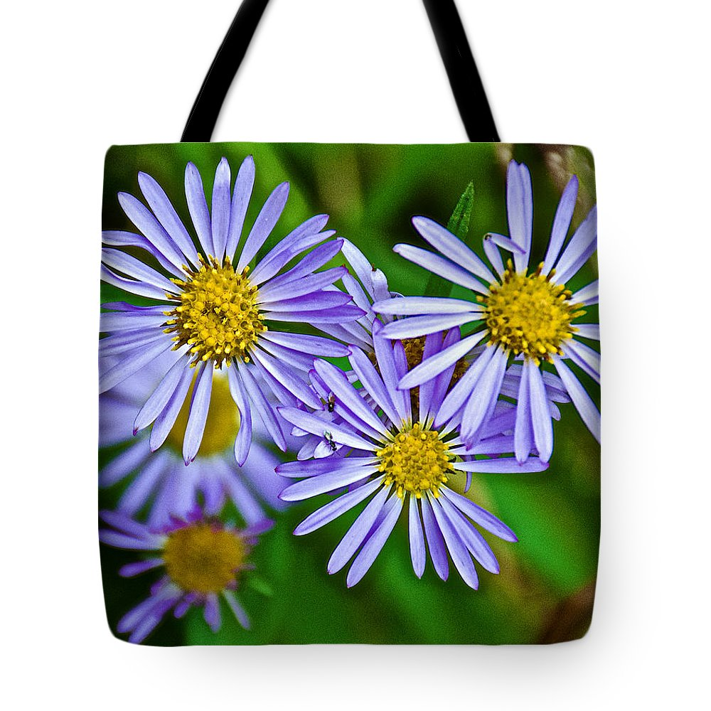 Closeup Of Leafy Bract Asters On Iron Creek Trail In Sawtooth National Wilderness Area-idaho From Iron Creek Trail In Sawtooth National Wilderness Area Tote Bag featuring the photograph Closeup Of Leafy Bract Asters On Iron Creek Trail In Sawtooth National Wilderness Area-idaho by Ruth Hager