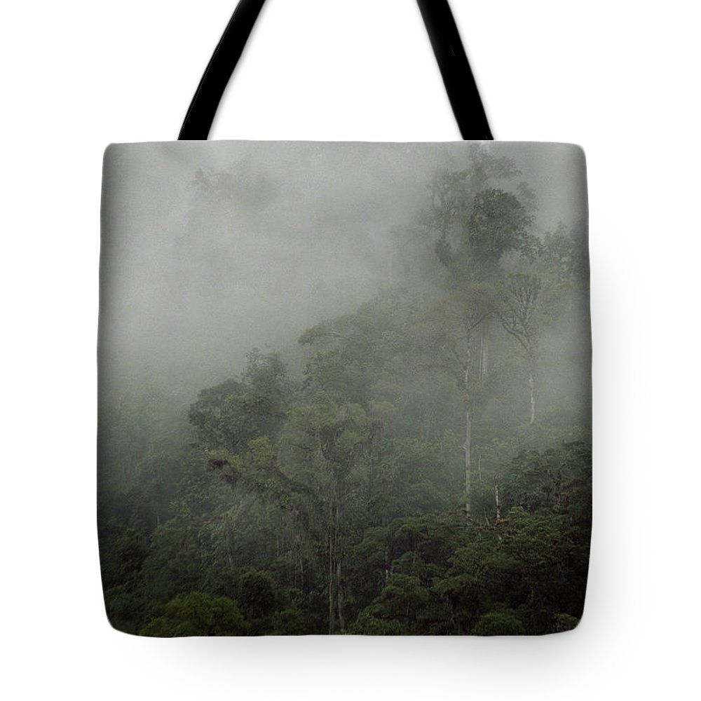 Rainforest Tote Bag featuring the photograph Cloud Forest by Kathy McClure