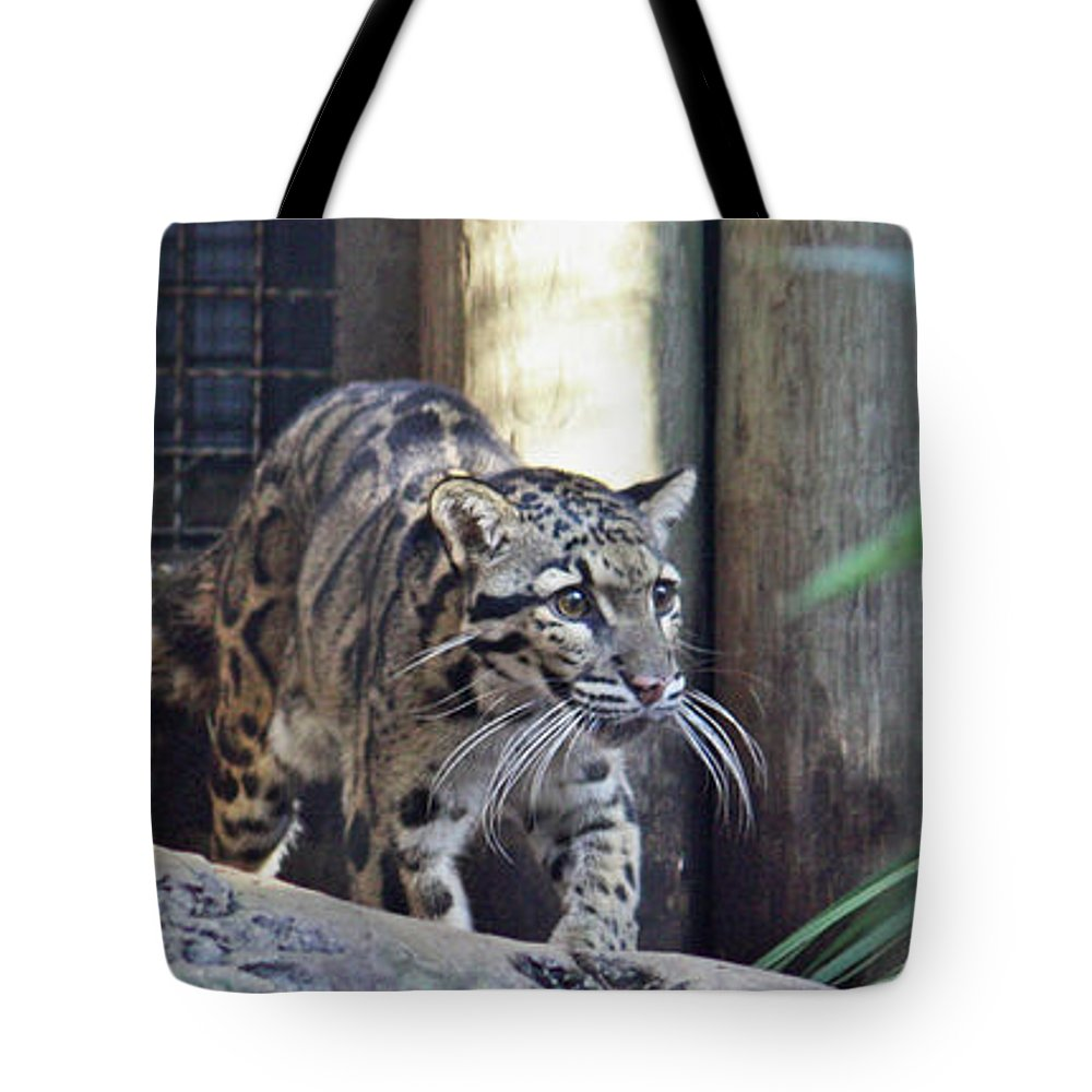 Leopard Tote Bag featuring the photograph Clouded Leopard by Terri Mills