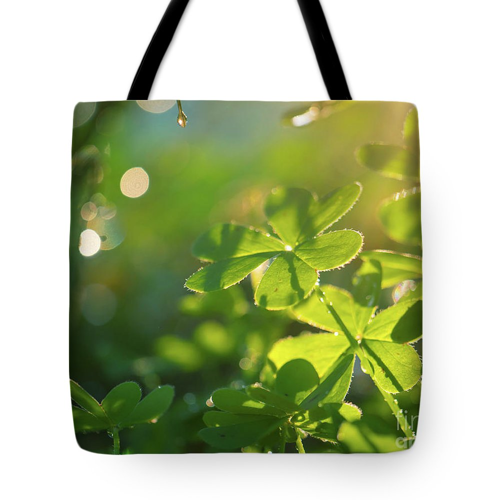 Clover Tote Bag featuring the photograph Clover Leaf In Garden, Macro by Konstantin Sutyagin