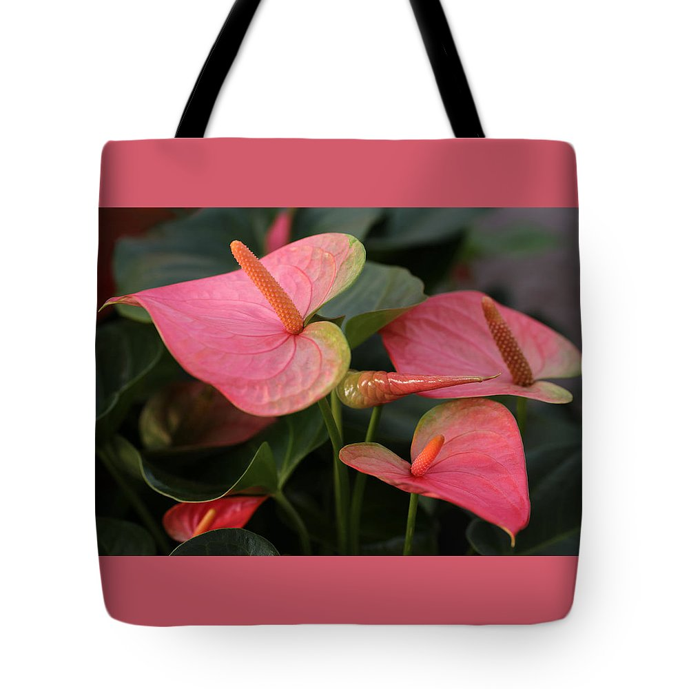 Anthurium Tote Bag featuring the photograph Cluster Anthurium by Tammy Pool