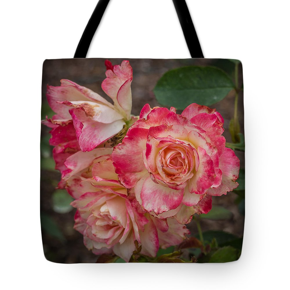Florda Tote Bag featuring the photograph Cluster Of Roses by Jane Luxton