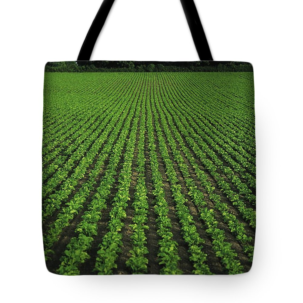 Agriculture Tote Bag featuring the photograph Co Tipperary, Ireland Sugar Beet by The Irish Image Collection