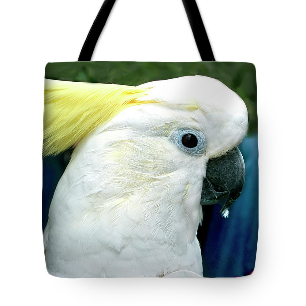 Cockatoo Tote Bag featuring the photograph Cockatoo Bird by Haleh Mahbod