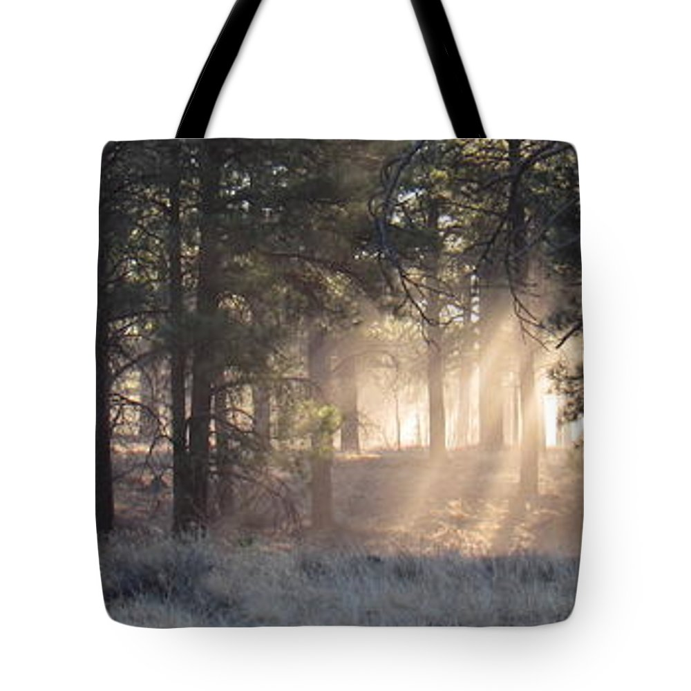 Coconino Forest Dawn Evergreen Forest Dawn Morning Light Forest Light Forest Sunbeams Rays Of Sunlight Forest Lightscape Natural Lightscapes Sunshine Natural Landscapes Rare Nature Pixels.com Nature Conservancy Tree Light Arizona Landscapes Ponderosa Forest High Desert Forest High Desert Woodland Flagstaff Arizona Tote Bag featuring the photograph Coconino Dawn by Joshua Bales