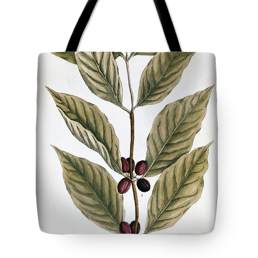 1730s Tote Bag featuring the photograph Coffee Plant, 1735 by Granger