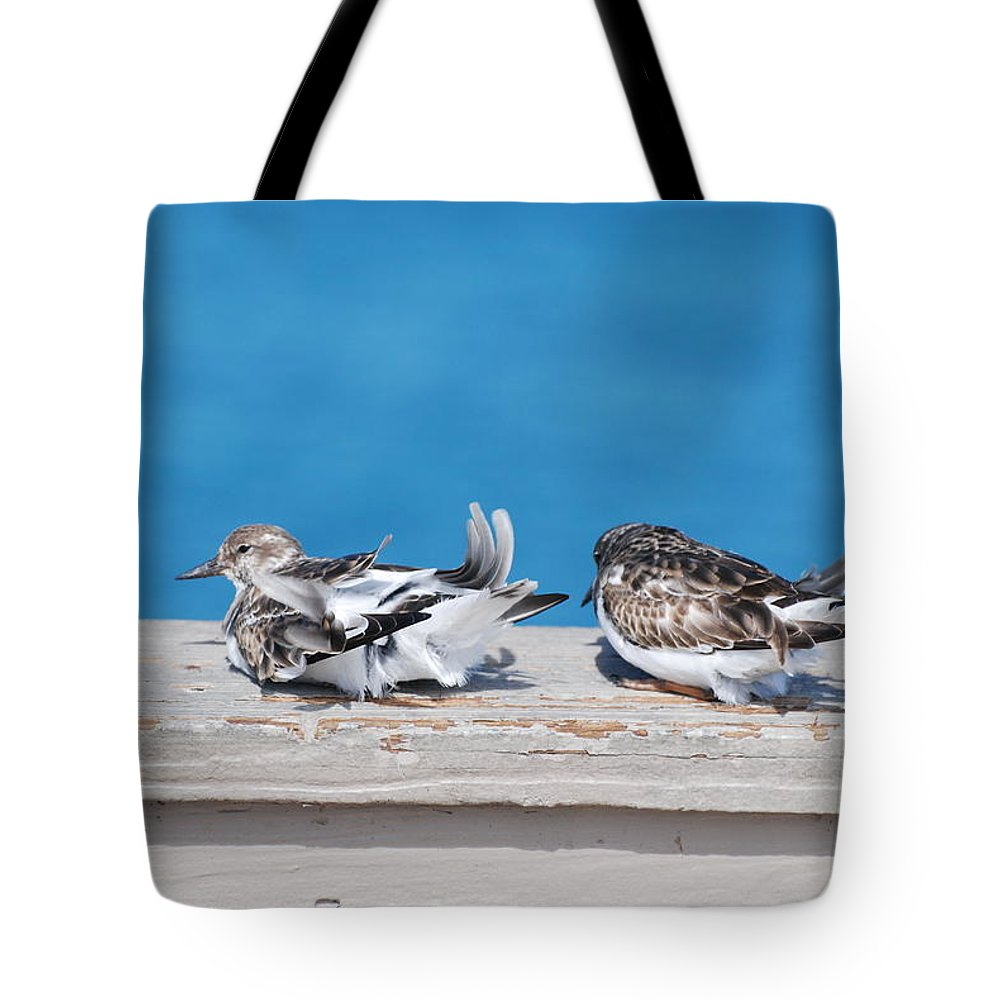 Bird Tote Bag featuring the photograph Cold Birds by Rob Hans