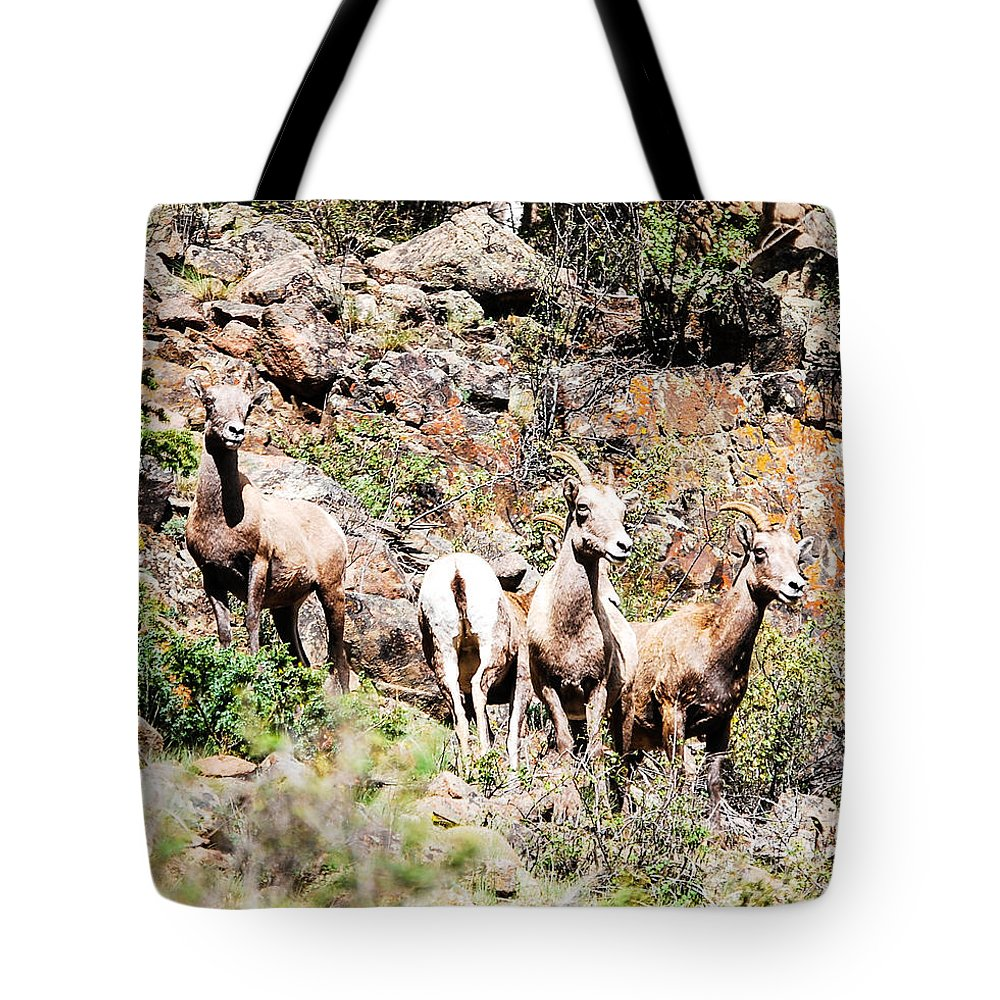 Wildlife Tote Bag featuring the photograph Colorado Mountain Sheep by Rupert Chambers