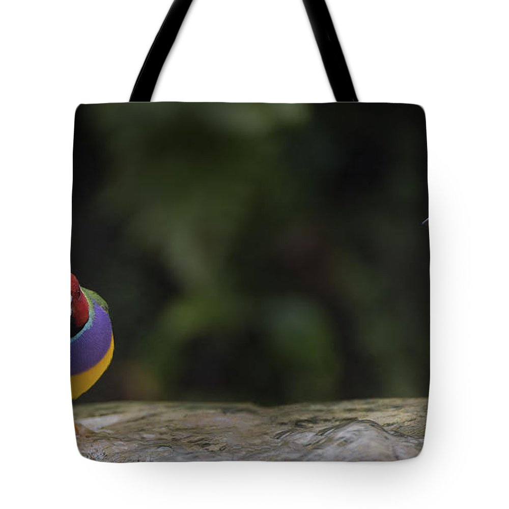 Florida Tote Bag featuring the photograph Colorful Guilian Finch And The Plain Bird by Penny Lisowski