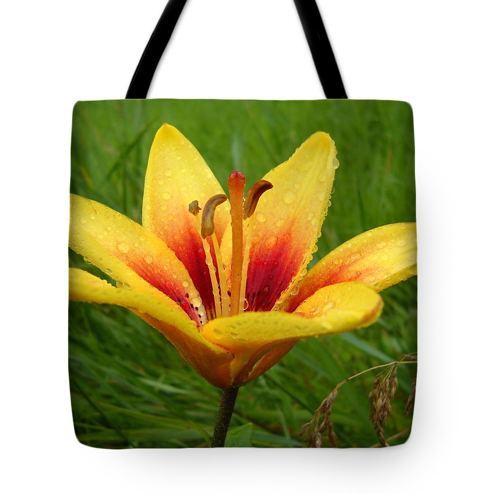 Floral Tote Bag featuring the photograph Colorful Lily Dew Drops by Kent Lorentzen
