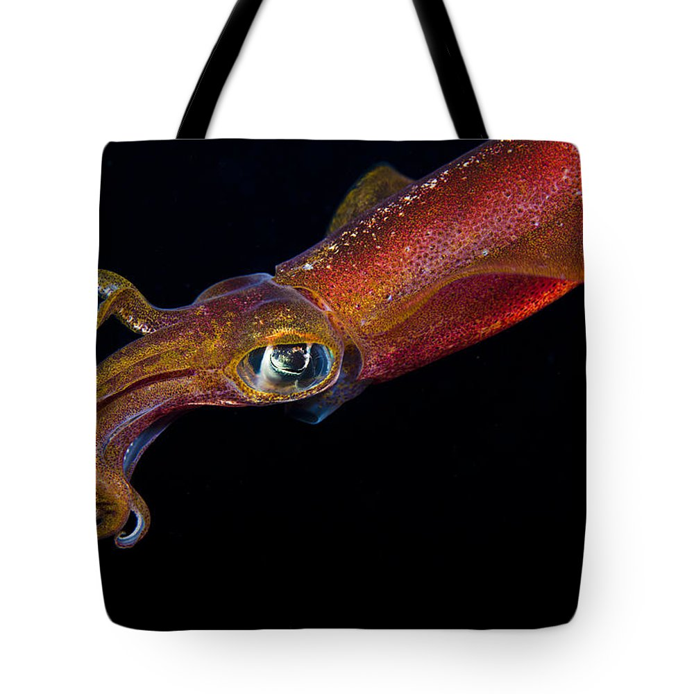 Colorful Oval Squid Tote Bag for Sale by Dave Fleetham - Printscapes