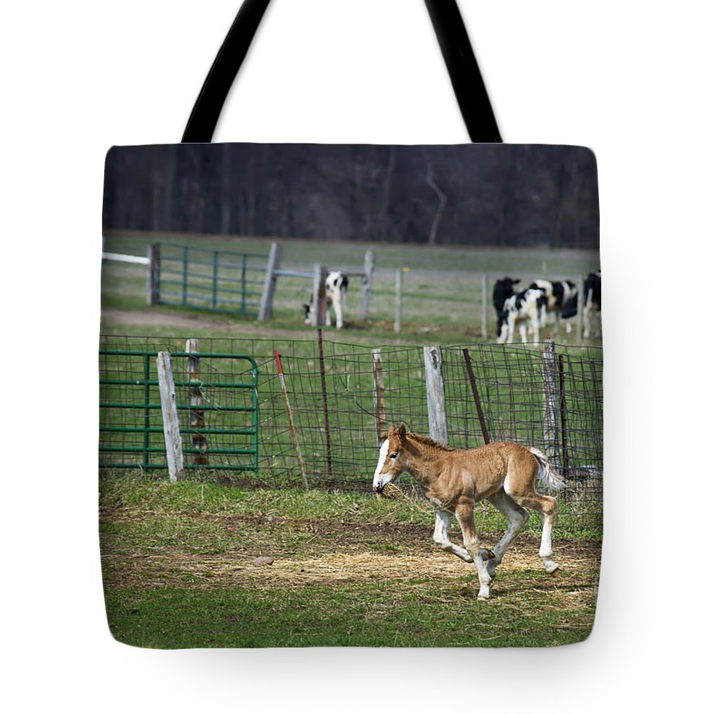 Horse Tote Bag featuring the photograph Colt Play With Hay by David Arment