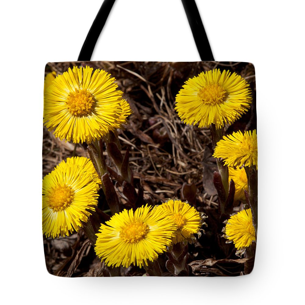 Wildflowers Tote Bag featuring the photograph Coltsfoot Ring by Irwin Barrett