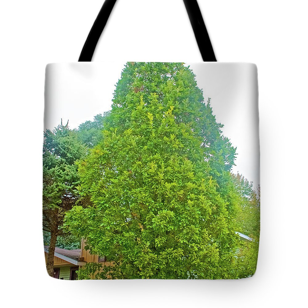 Columnar Oak Along White Pine Trail Near Rockford Tote Bag featuring the photograph Columnar Oak Along White Pine Trail In Kent County, Michigan by Ruth Hager