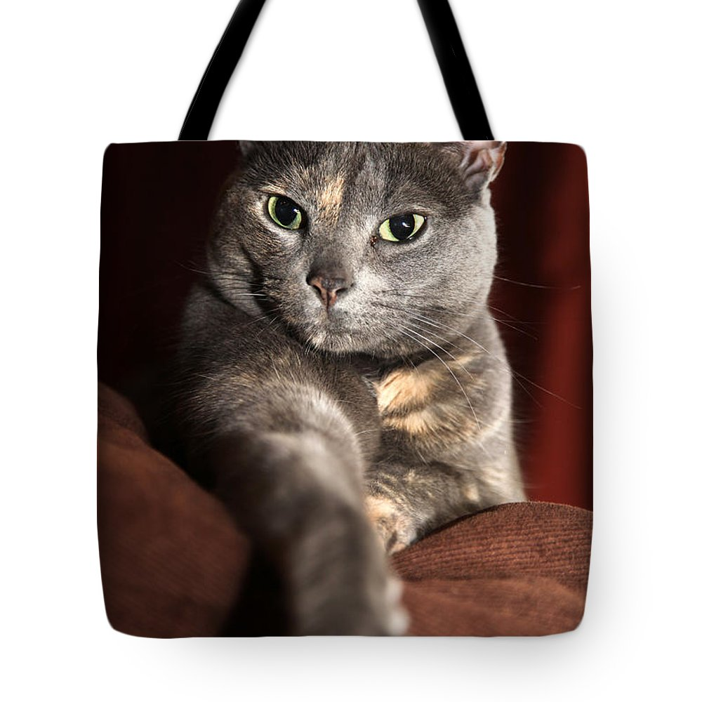 Kitty Tote Bag featuring the photograph Come Here by Amanda Barcon