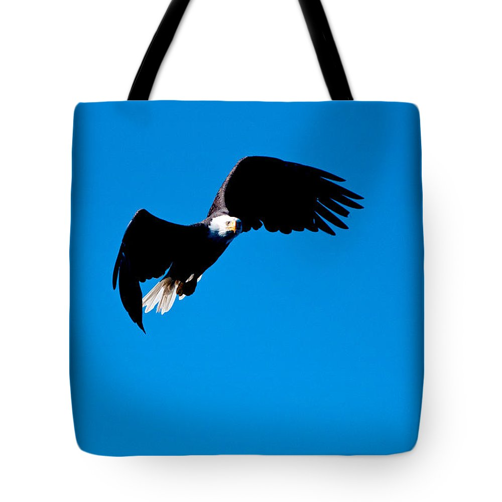 Eagle Tote Bag featuring the photograph Coming In For A Closer Look by Paul Mangold