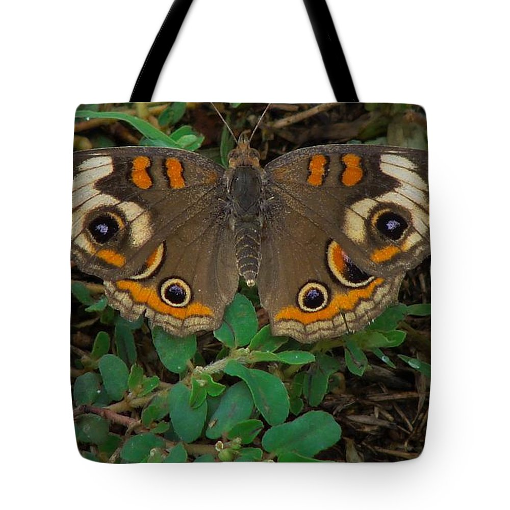Tote Bag featuring the photograph Common Buckeye by Carl Moore