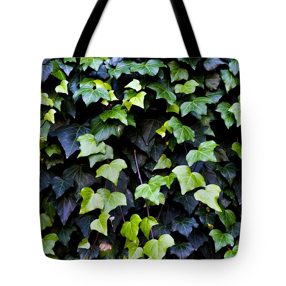 Close Up Tote Bag featuring the photograph Common Ivy by Fabrizio Troiani