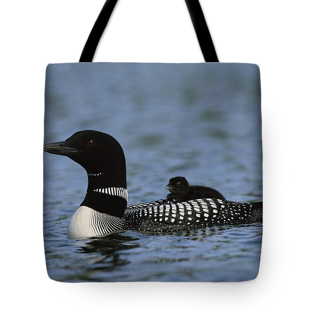 North America Tote Bag featuring the photograph Common Loon Gavia Immer, With Baby by Roy Toft