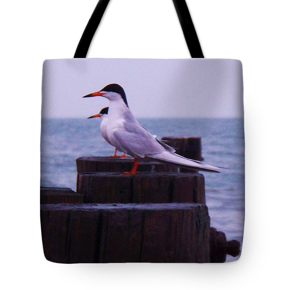 Birds Tote Bag featuring the painting Common Tern Sterna Hirundo by Eric Schiabor