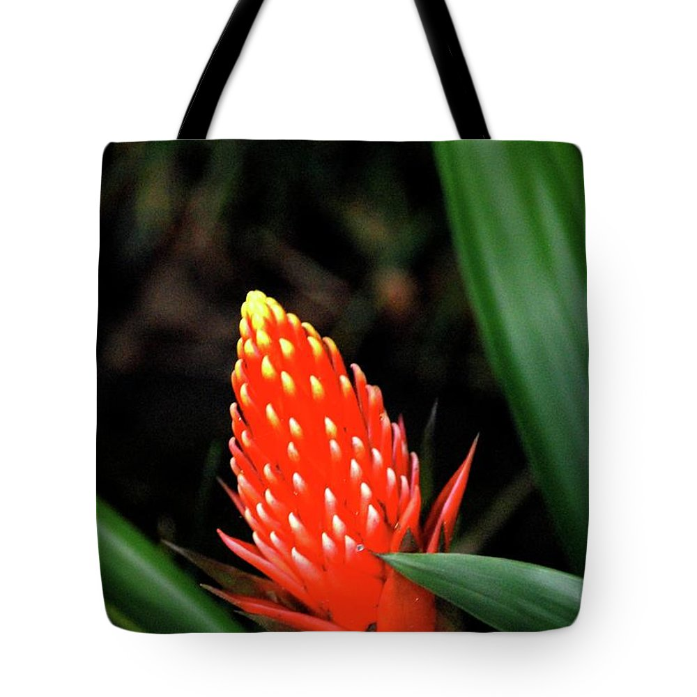 Red Flower Tote Bag featuring the photograph Cone Of Color by Debbie Karnes