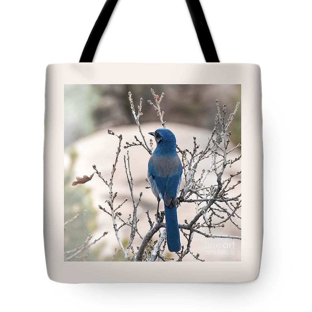 Blue Jay Tote Bag featuring the photograph Contemplating The Winter To Come by Jennifer Mitchell