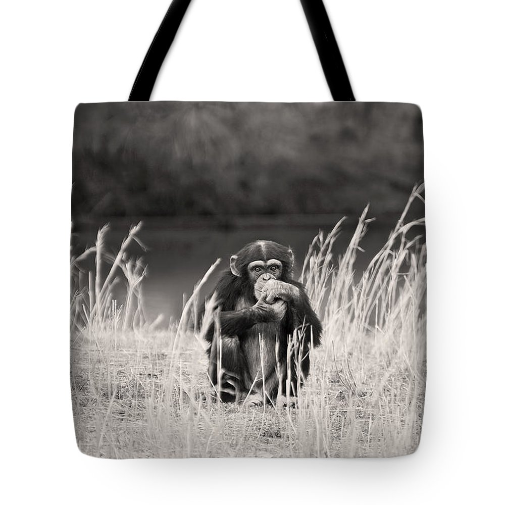 Chimp Tote Bag featuring the photograph Contemplation by Amy Jackson