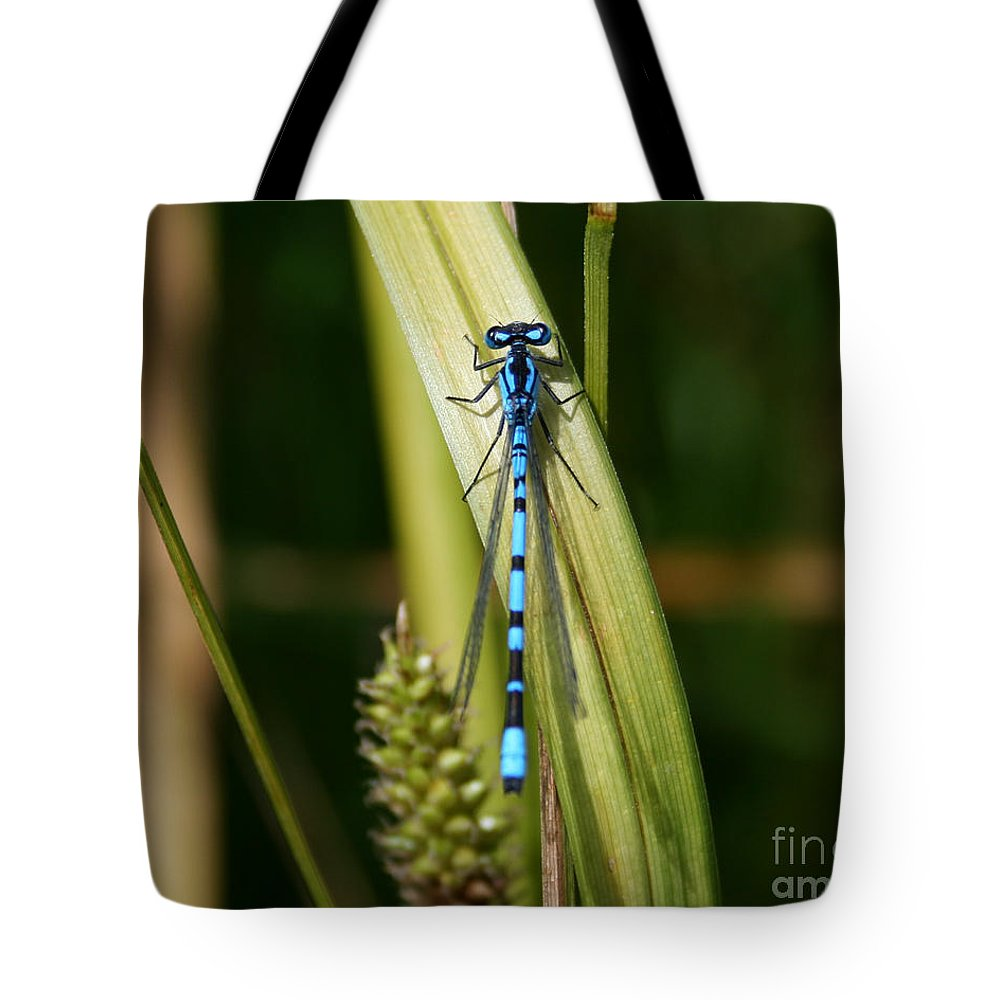 Colorado Tote Bag featuring the photograph Contrast Alive by Colin Davis