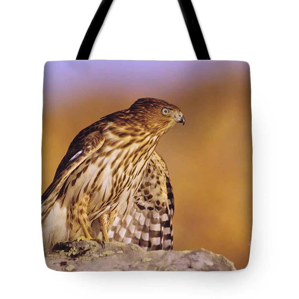 Accipiter Tote Bag featuring the photograph Coopers Hawk by John Hyde - Printscapes