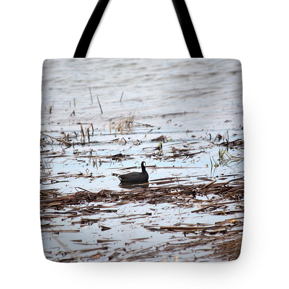 American Coot Tote Bag featuring the photograph Coot In The Weeds by Linda Kerkau