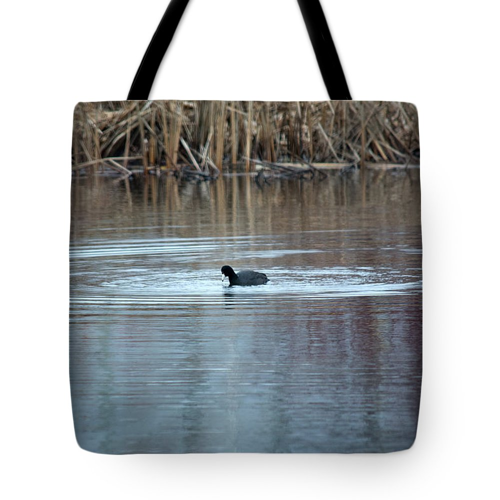 American Coot Tote Bag featuring the photograph Coot by Linda Kerkau