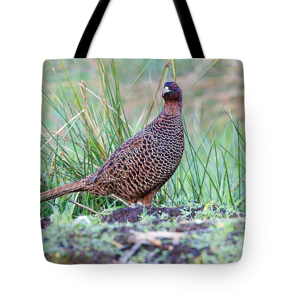 Copper Pheasant Tote Bag featuring the photograph Copper Pheasant by Bob Kemp