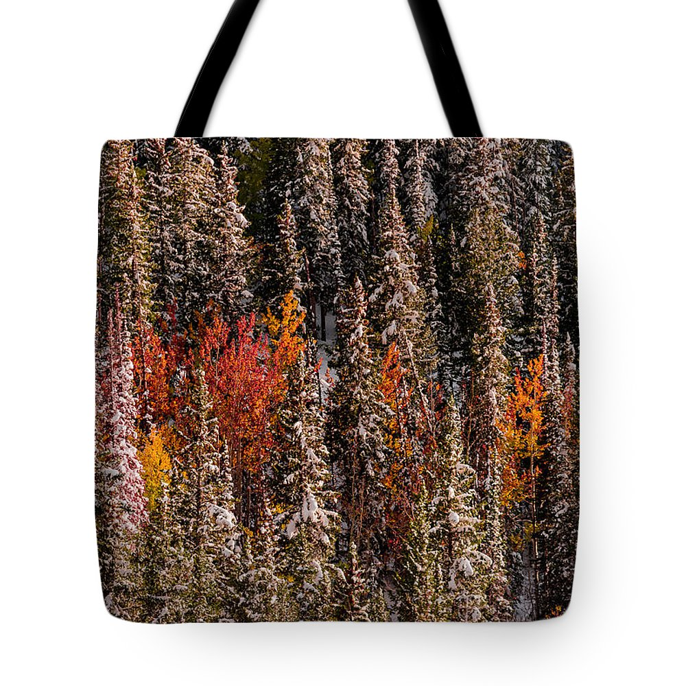 Fall Tote Bag featuring the photograph Copse Of Color by Dave Koch