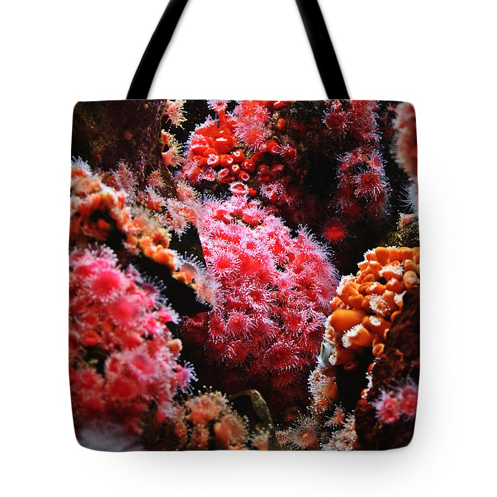 Animals Tote Bag featuring the photograph Coral Polyps by Michelle Williamson